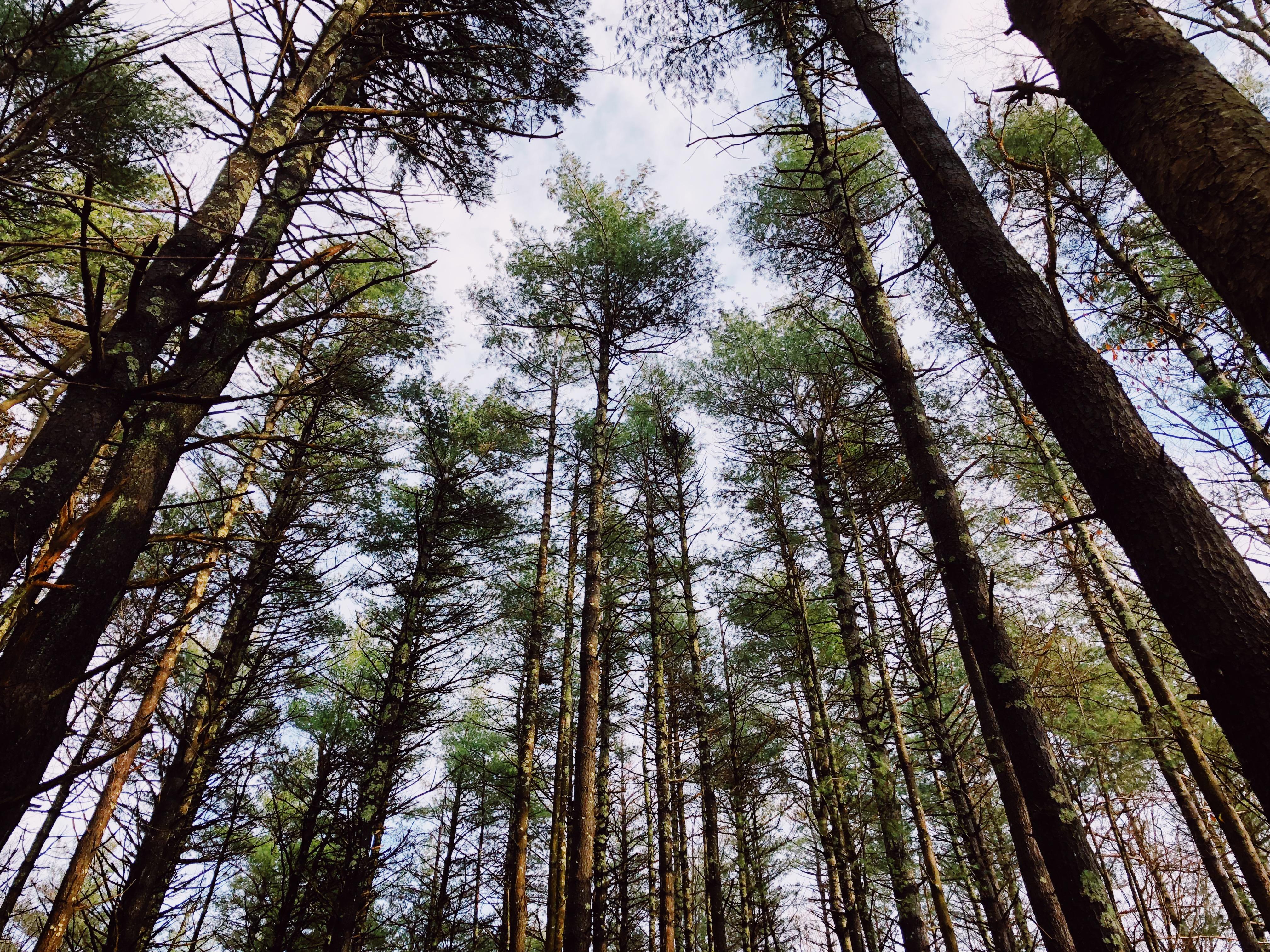 Anna Tullis Trees